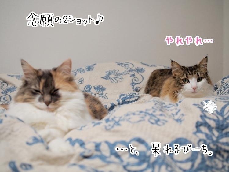 P4230207_1.jpg