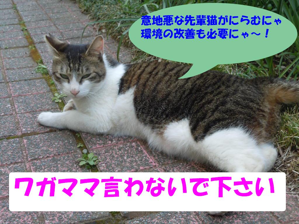 にらむしんちゃん5-4