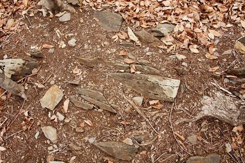 20170415-06 滝子山南稜・新第三紀の付加体堆積岩a
