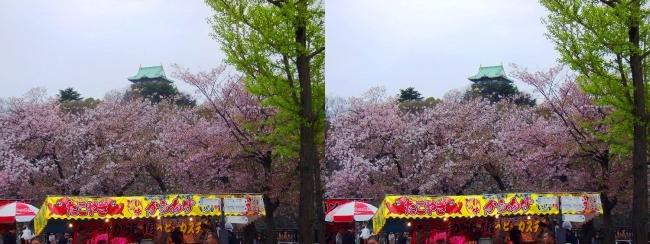大阪城公園の桜⑦(平行法)