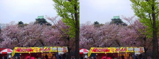 大阪城公園の桜⑦(交差法)