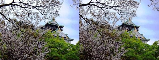 大阪城公園の桜⑥(交差法)