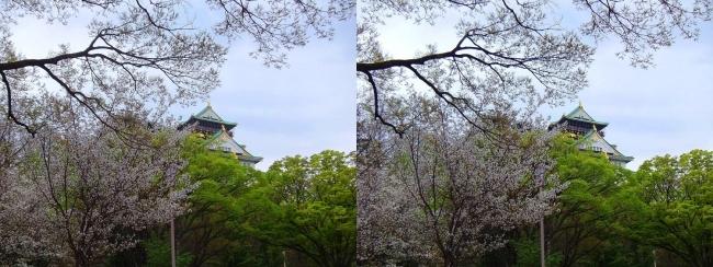 大阪城公園の桜⑤(平行法)