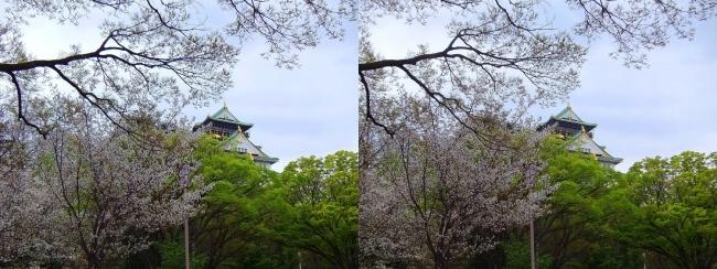 大阪城公園の桜⑤(交差法)