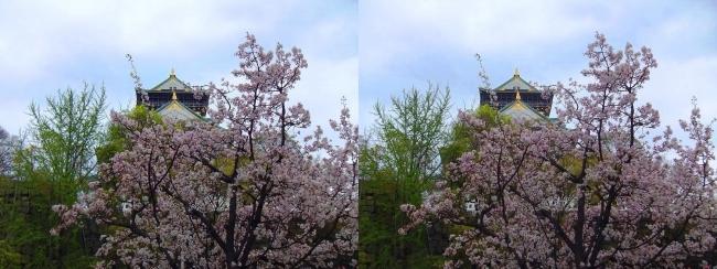 大阪城公園の桜④(交差法)