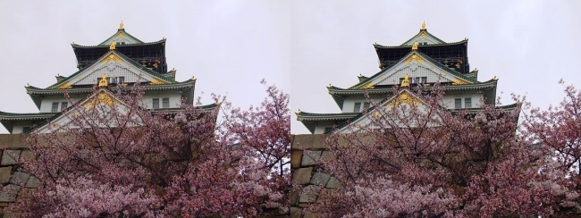 大阪城公園の桜②(平行法)