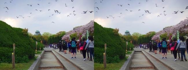 大阪城公園の桜①(交差法)