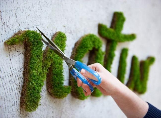 wall-moss-nature.jpg