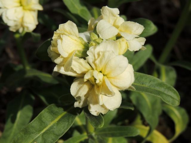 N8903庭の片隅に咲く