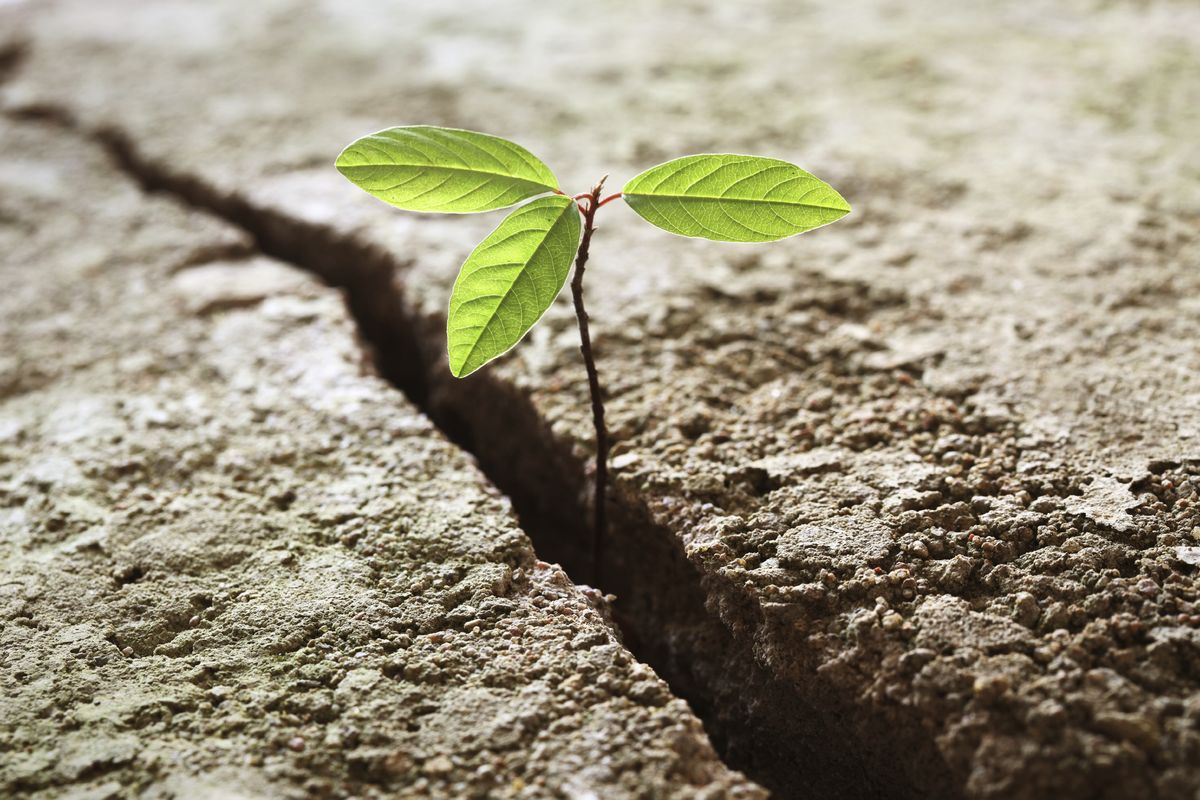 resilience_leafinground.jpg