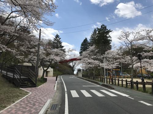 【2017 松ケ岡公園の桜並木】・14