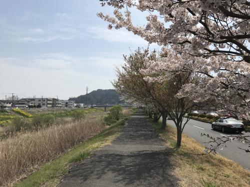 【通勤サクラロード】・5