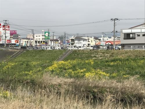 【通勤サクラロード】・9