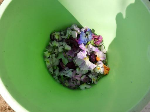 ビオラの花がら