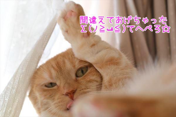 DSC_2520.jpg