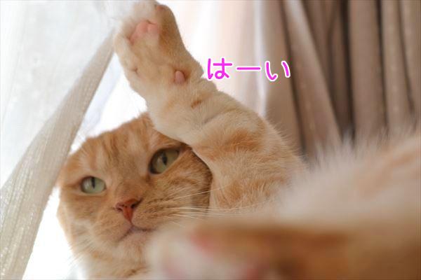 DSC_2521.jpg