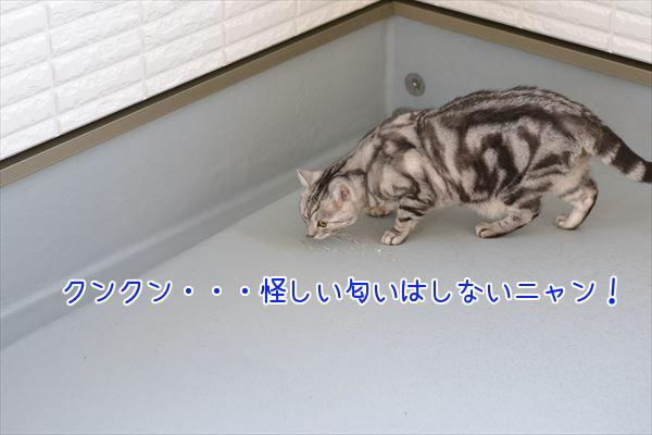 DSC_3359.jpg
