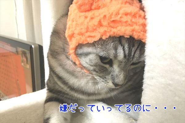 IMG_4099_R.jpg