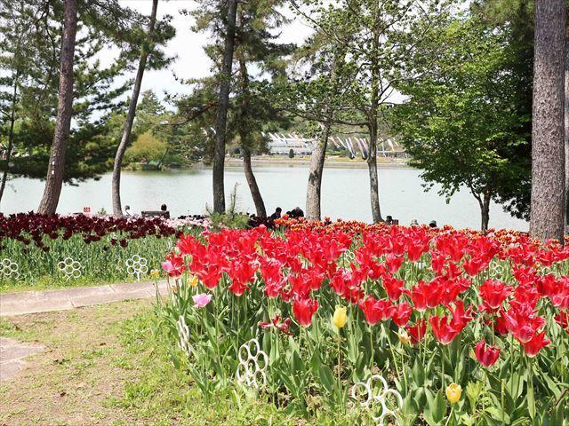2017 04 29_フラワーセンター_1130_R