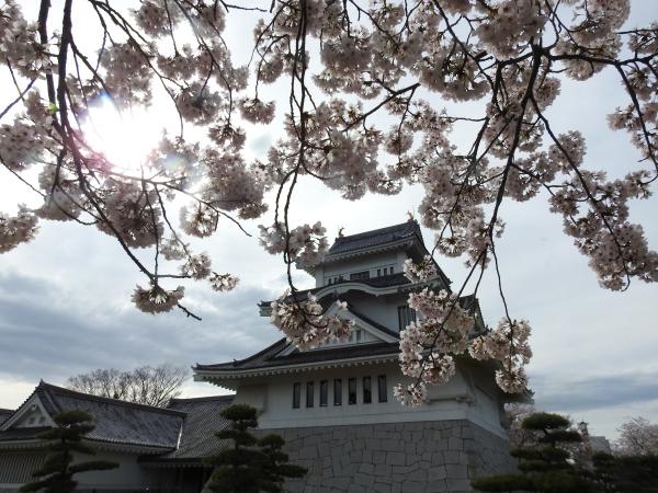 170412霞ケ浦の桜_2