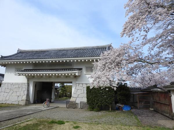 170412霞ケ浦の桜_3