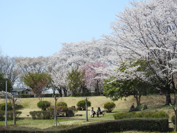 170415桜川_風土記の丘_03