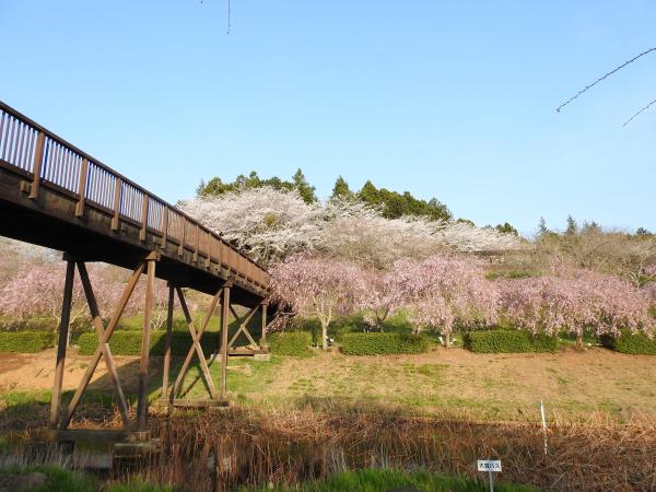 170415桜川_風土記の丘_09
