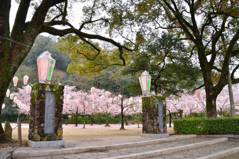 桜・その他 (4)