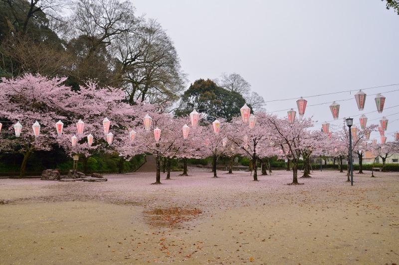 桜・その他 (1)