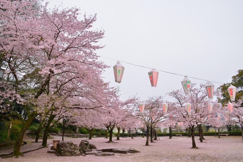 桜・その他 (2)