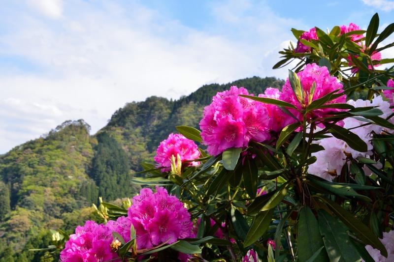 星の花公園 (6)