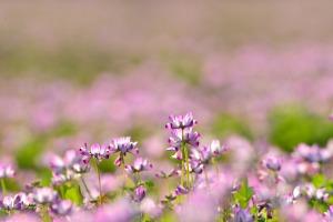 170428庭の花_020