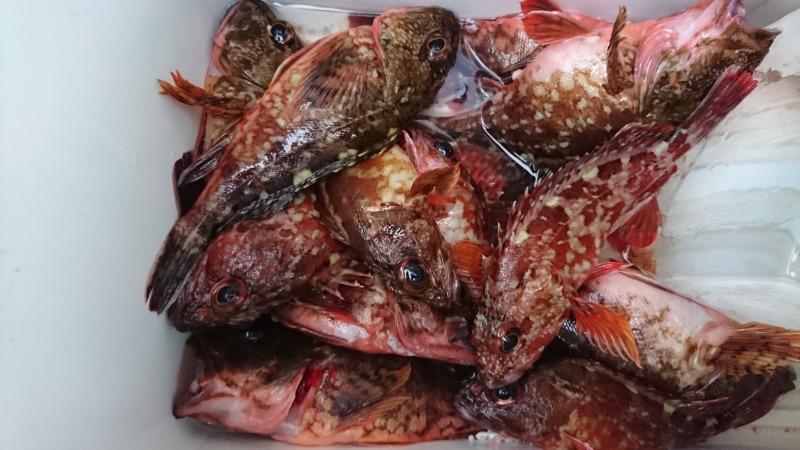 魚釣り (3)