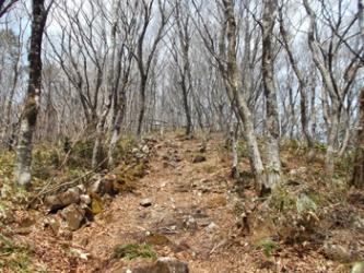 明るい雑木林の中の道を歩く