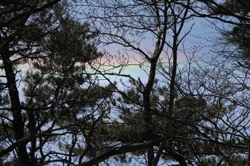 林の中から見た彩雲