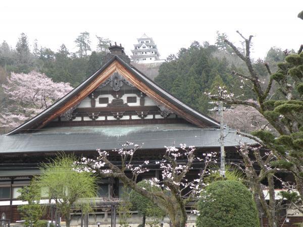 八幡城と桜