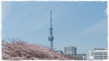 2017桜-----27
