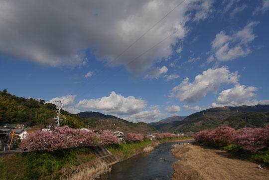 008川沿いの桜並木