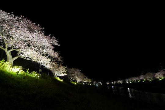 103夜桜