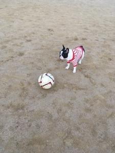 サッカーボール②