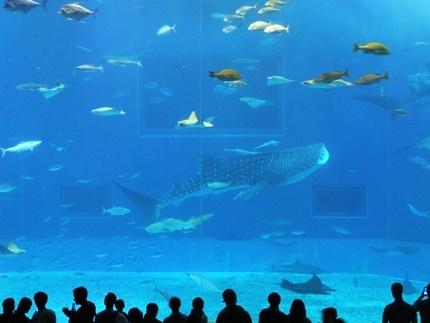 沖縄 美ら海水族館