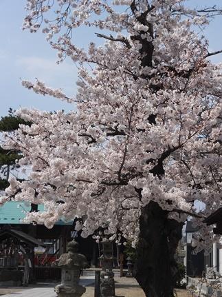 名取 増田神社
