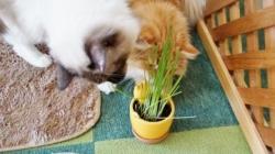 初めての猫草! その3 1