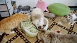 大きめな猫ソファー争奪戦! その2 1