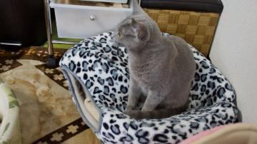 大きめな猫ソファー争奪戦! その2 5