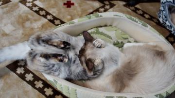大きめな猫ソファー争奪戦! その5 3