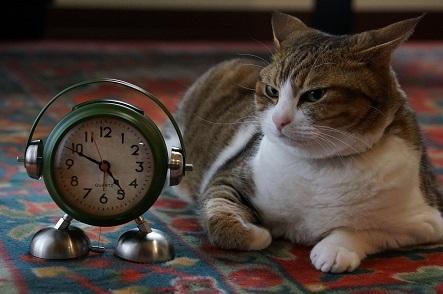 丸い時計とまる