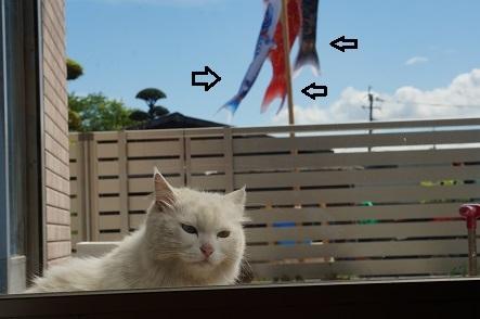 窓開けてイエナカに風を通すことができた。