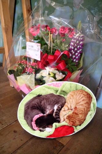 花とパネル