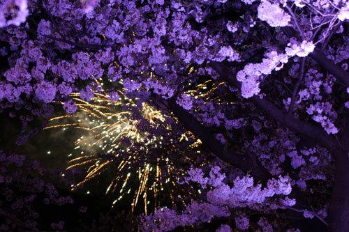 20170415夜桜3